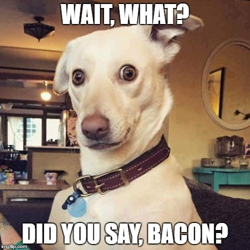 A funny looking white dog and text: Wait, what? Did you say bacon?