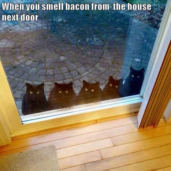 Five cats looking inside a glass door and text: When you smell bacon from the house next door.